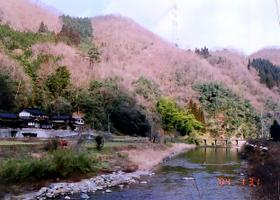 Nunohara3