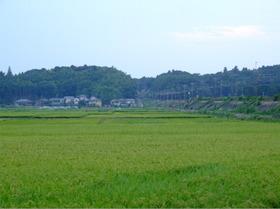Oosakura1