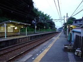 Oosakura3