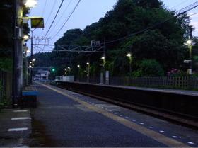 Oosakura5