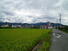 Koikawa6
