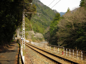 Mikawamakihara8